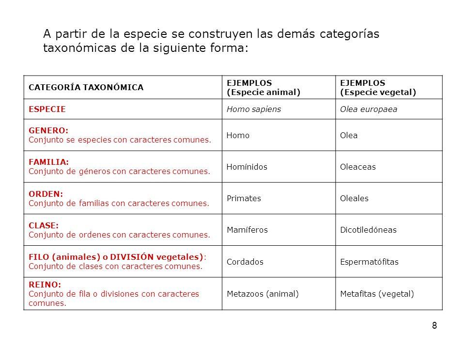 8 CATEGORÍA TAXONÓMICA EJEMPLOS (Especie animal) EJEMPLOS (Especie vegetal) ESPECIEHomo sapiensOlea europaea GENERO: Conjunto se especies con caracter
