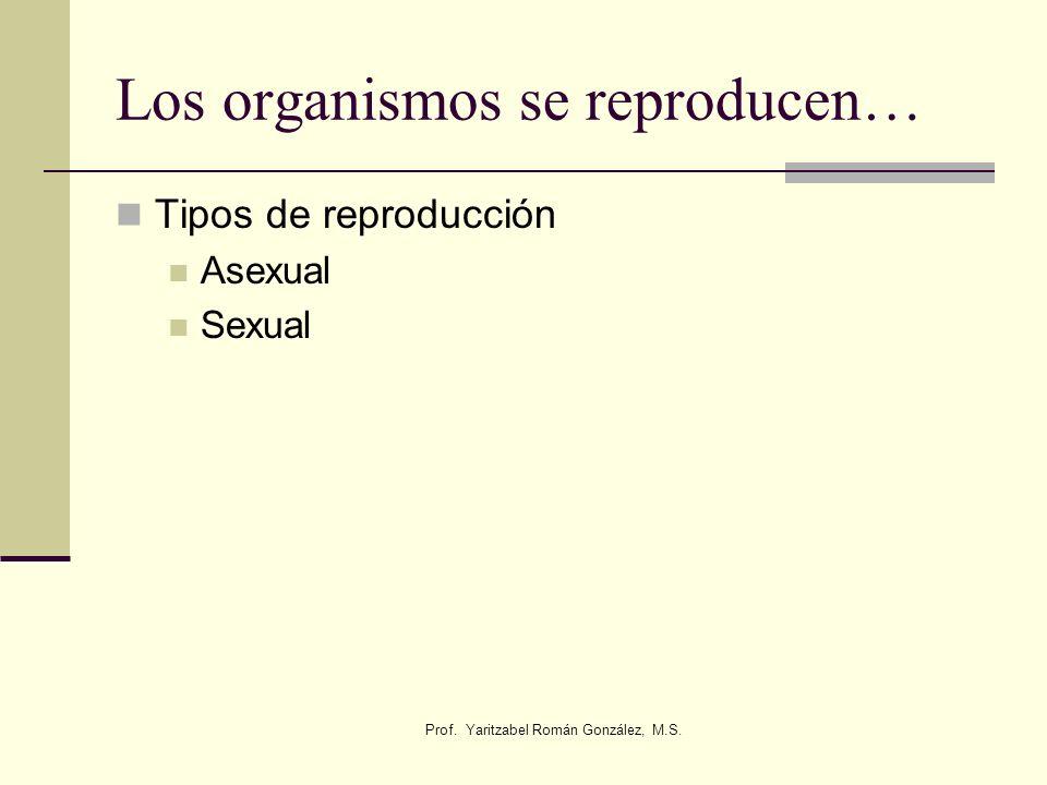 Prof. Yaritzabel Román González, M.S. Los organismos se reproducen… Tipos de reproducción Asexual Sexual