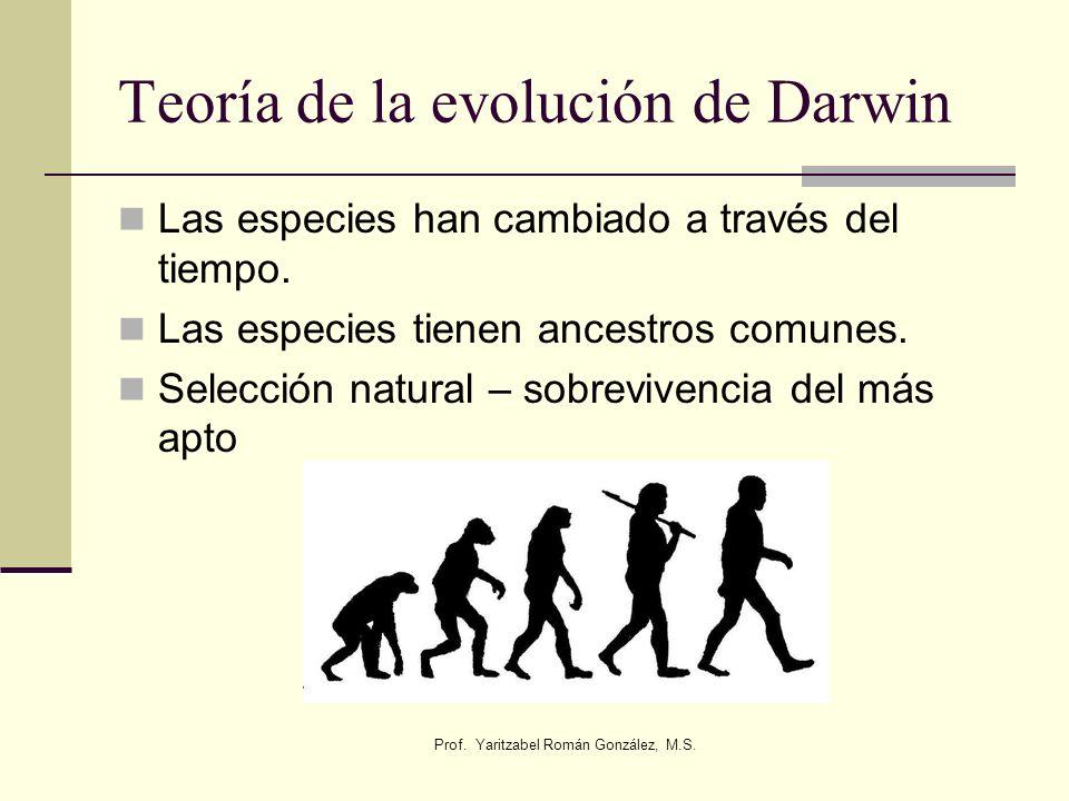 Prof. Yaritzabel Román González, M.S. Teoría de la evolución de Darwin Las especies han cambiado a través del tiempo. Las especies tienen ancestros co