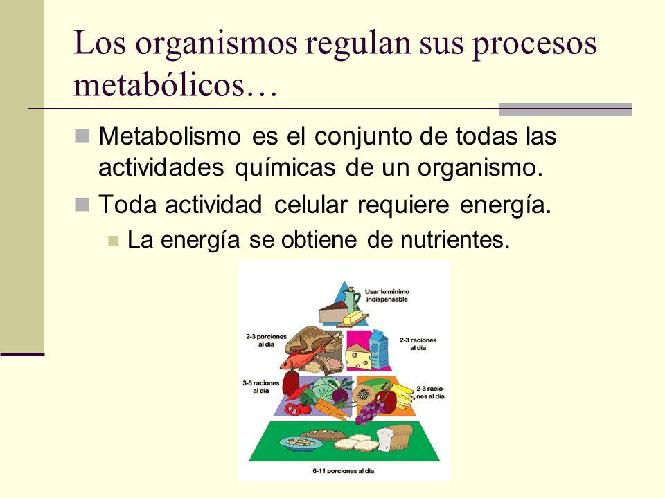 Los organismos regulan sus procesos metabólicos… Metabolismo es el conjunto de todas las actividades químicas de un organismo. Toda actividad celular