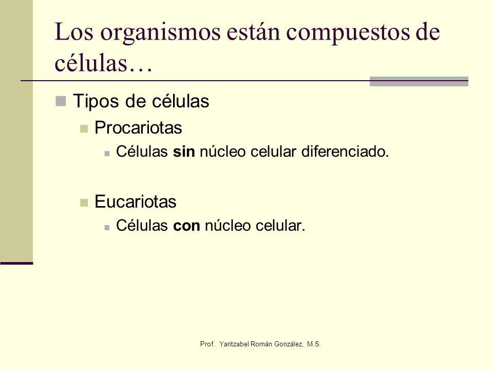Prof. Yaritzabel Román González, M.S. Los organismos están compuestos de células… Tipos de células Procariotas Células sin núcleo celular diferenciado