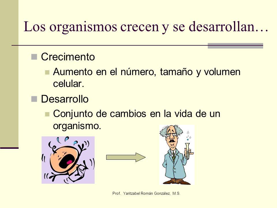 Prof. Yaritzabel Román González, M.S. Los organismos crecen y se desarrollan… Crecimento Aumento en el número, tamaño y volumen celular. Desarrollo Co