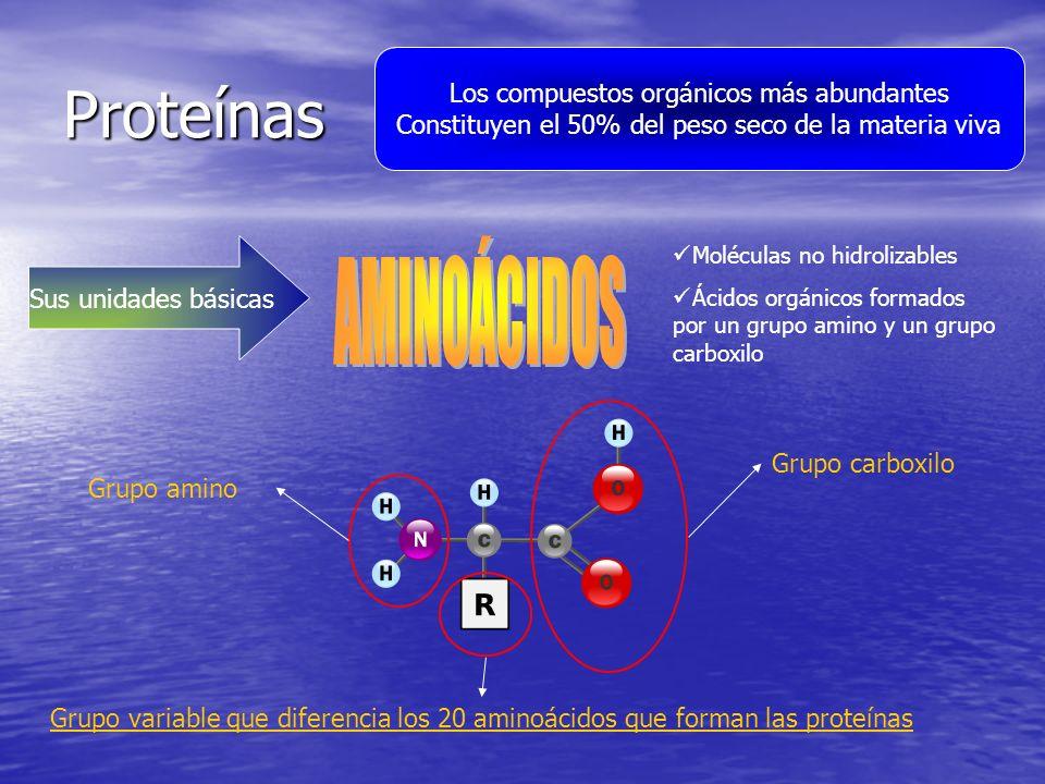 Proteínas Los compuestos orgánicos más abundantes Constituyen el 50% del peso seco de la materia viva Sus unidades básicas Moléculas no hidrolizables Ácidos orgánicos formados por un grupo amino y un grupo carboxilo Grupo carboxilo Grupo amino Grupo variable que diferencia los 20 aminoácidos que forman las proteínas