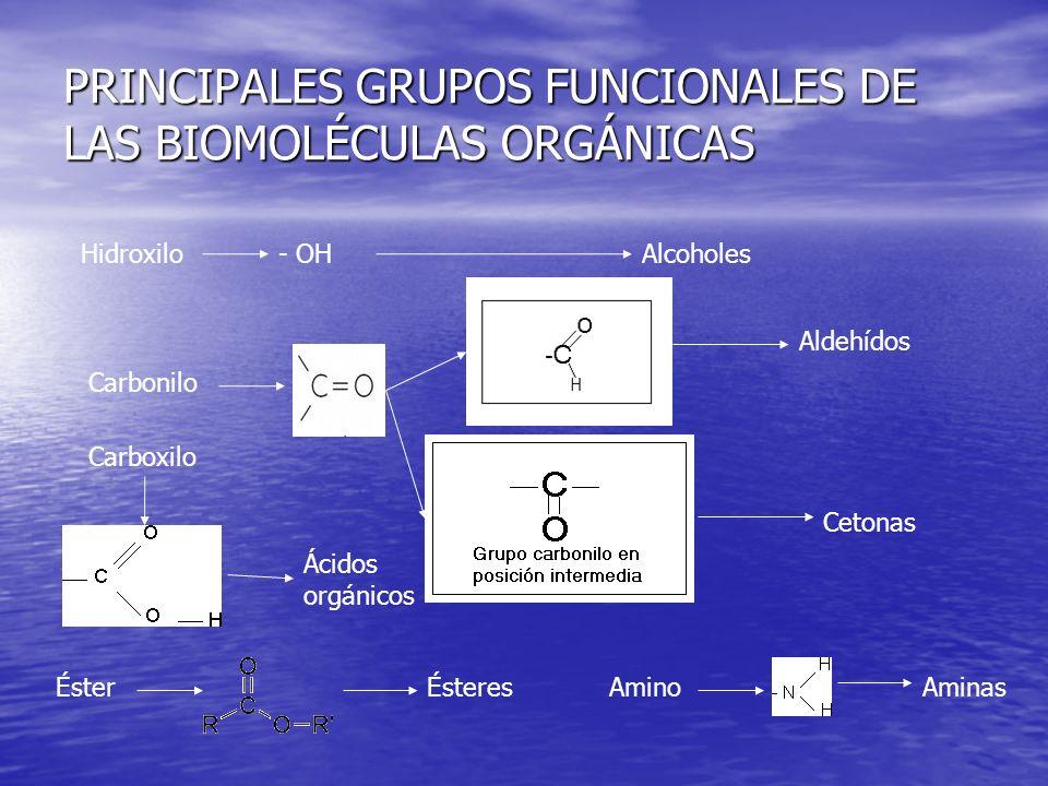 PRINCIPALES GRUPOS FUNCIONALES DE LAS BIOMOLÉCULAS ORGÁNICAS Hidroxilo - OH Alcoholes Carbonilo Aldehídos Cetonas Carboxilo Ácidos orgánicos ÉsterÉsteresAminoAminas