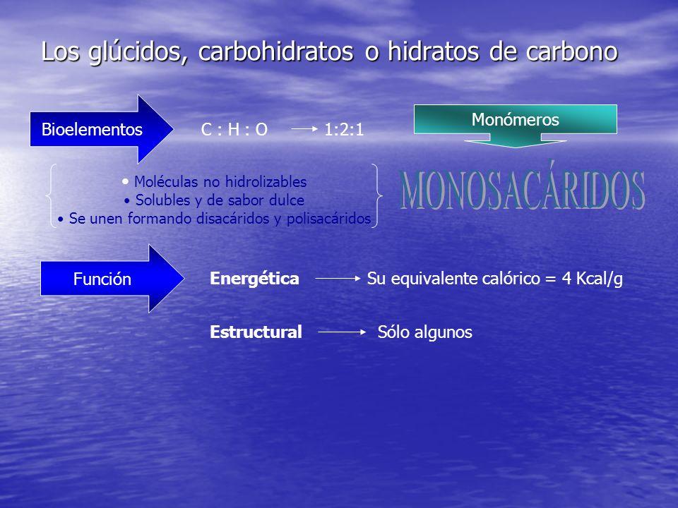 Los glúcidos, carbohidratos o hidratos de carbono Bioelementos C : H : O1:2:1 Monómeros Moléculas no hidrolizables Solubles y de sabor dulce Se unen formando disacáridos y polisacáridos Función EnergéticaSu equivalente calórico = 4 Kcal/g EstructuralSólo algunos