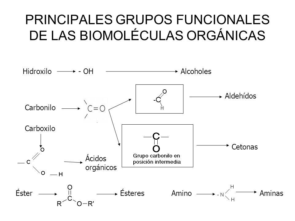 PRINCIPALES GRUPOS FUNCIONALES DE LAS BIOMOLÉCULAS ORGÁNICAS Hidroxilo - OH Alcoholes Carbonilo Aldehídos Cetonas Carboxilo Ácidos orgánicos ÉsterÉste