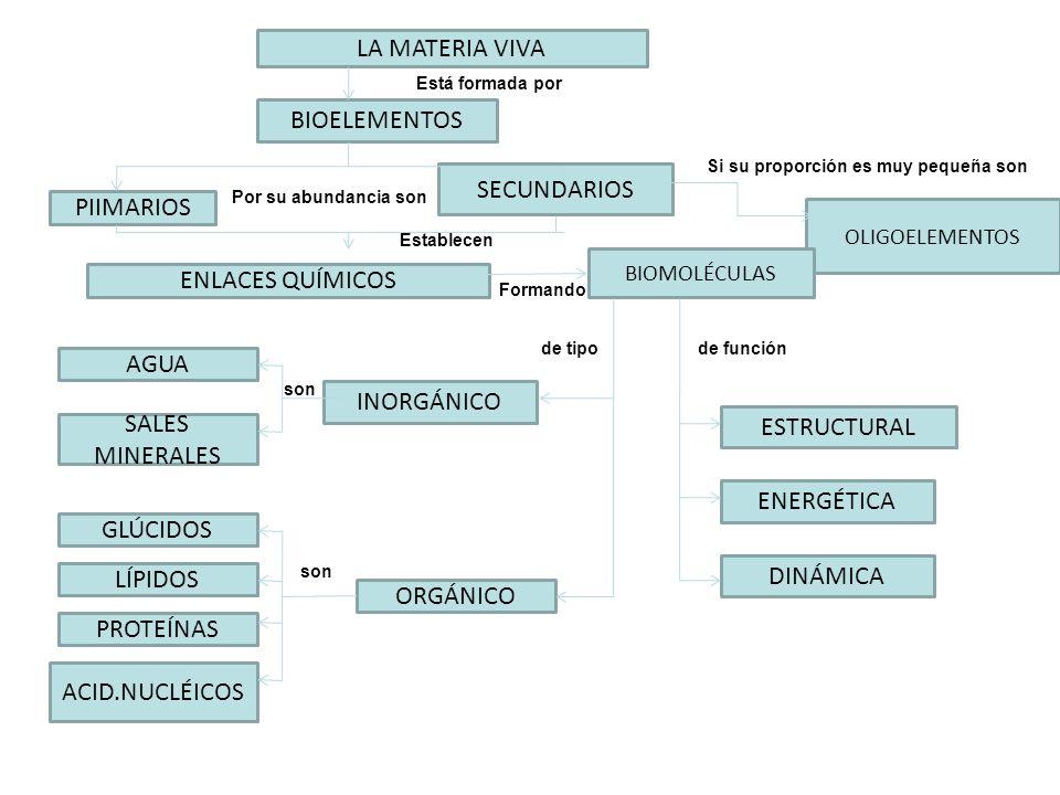 LA MATERIA VIVA BIOELEMENTOS PIIMARIOS ENLACES QUÍMICOS INORGÁNICO SALES MINERALES OLIGOELEMENTOS SECUNDARIOS BIOMOLÉCULAS AGUA GLÚCIDOS LÍPIDOS PROTE