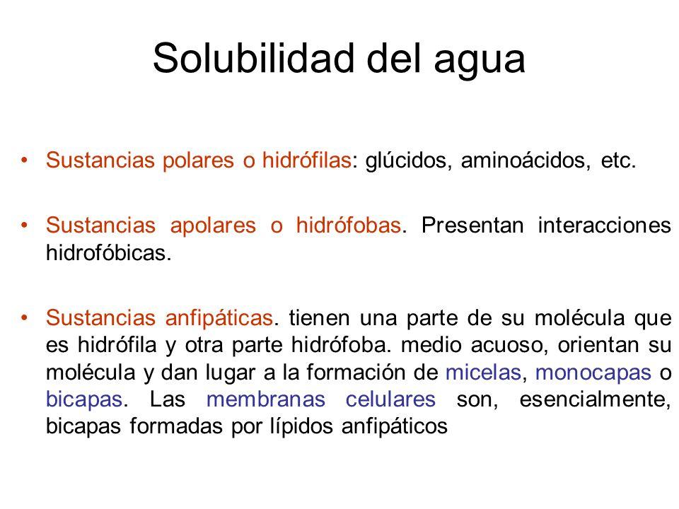 Solubilidad del agua Sustancias polares o hidrófilas: glúcidos, aminoácidos, etc. Sustancias apolares o hidrófobas. Presentan interacciones hidrofóbic
