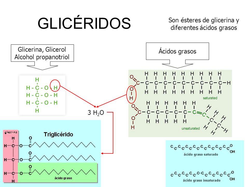 GLICÉRIDOS Son ésteres de glicerina y diferentes ácidos grasos Glicerina, Glicerol Alcohol propanotriol Ácidos grasos 3 H 2 O
