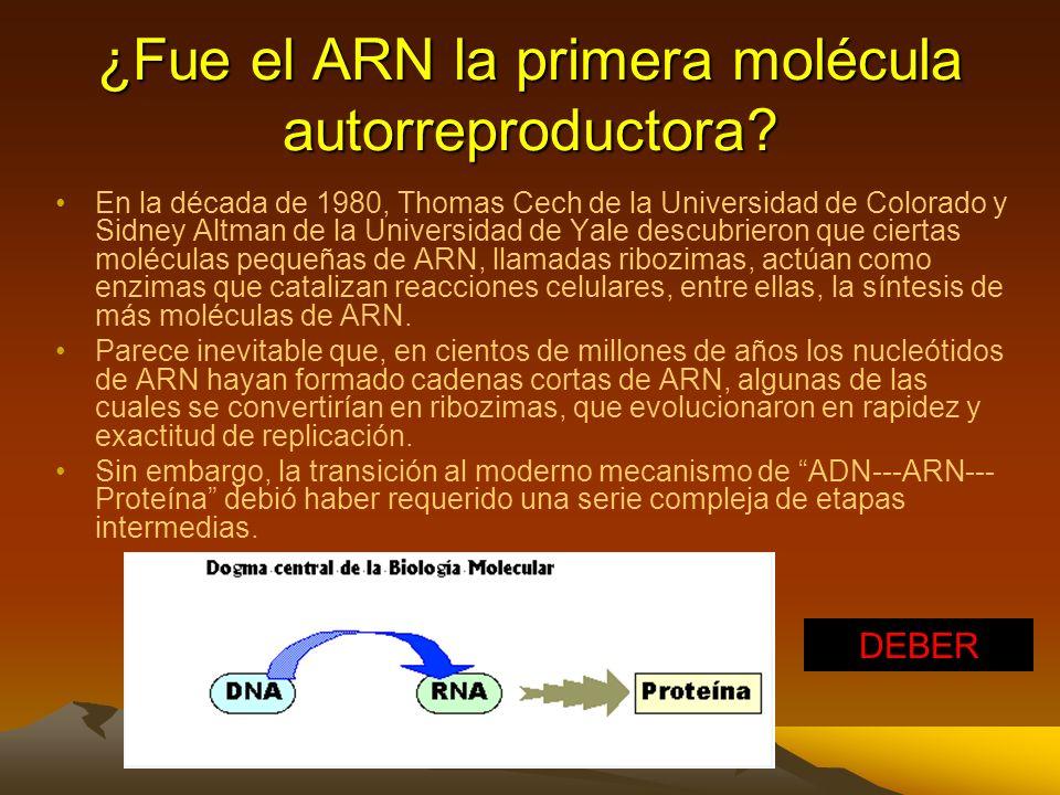 Sin embargo, para que se formen las moléculas orgánicas complejas como ARN y proteínas era necesaria una mayor concentración de sustancias, de modo qu