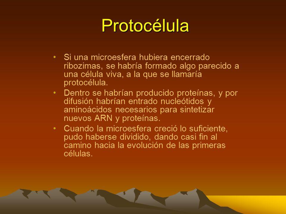 Las protocélulas pudieron haber consistido en ribozimas encerradas en microesferas Los químicos han demostrado que si se agita agua que contenga prote