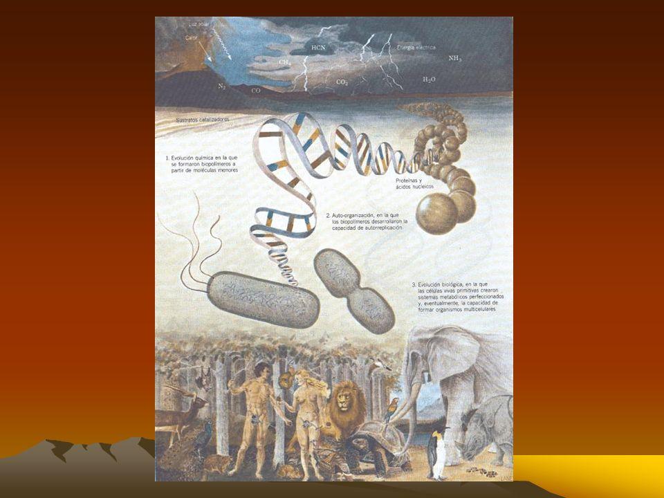 En 1920 y 1930, Alexander Oparin en Rusia y John B.S. Haldane en Inglaterra advirtieron que la atmósfera rica en oxígeno no habría permitido la formac