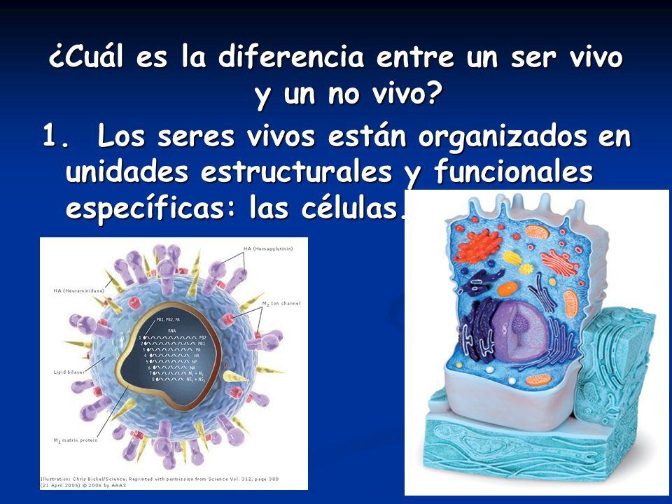 ¿Cuál es la diferencia entre un ser vivo y un no vivo? 1. Los seres vivos están organizados en unidades estructurales y funcionales específicas: las c