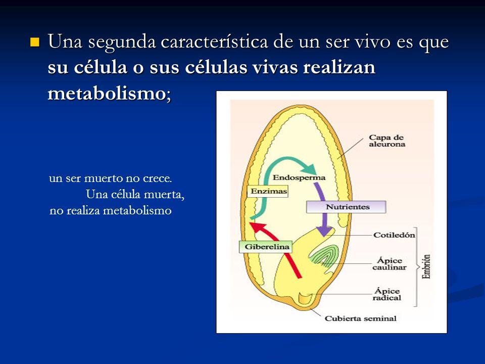 Una segunda característica de un ser vivo es que su célula o sus células vivas realizan metabolismo; Una segunda característica de un ser vivo es que