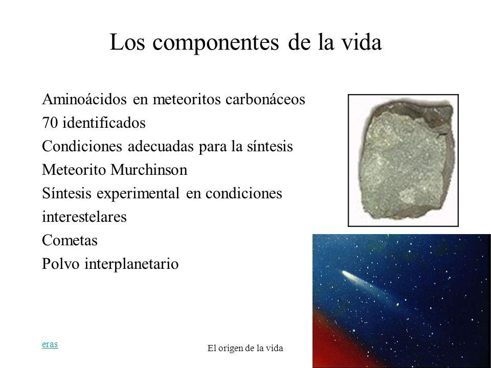 eras El origen de la vida19 Los componentes de la vida Aminoácidos en meteoritos carbonáceos 70 identificados Condiciones adecuadas para la síntesis M