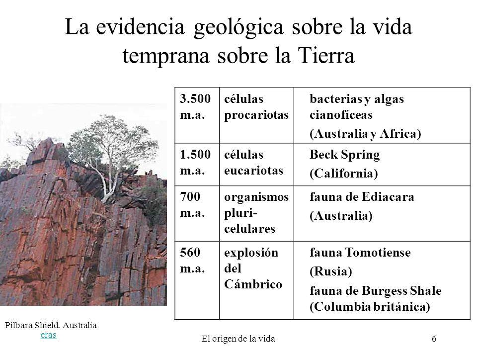 eras El origen de la vida6 La evidencia geológica sobre la vida temprana sobre la Tierra 3.500 m.a. células procariotas bacterias y algas cianofíceas