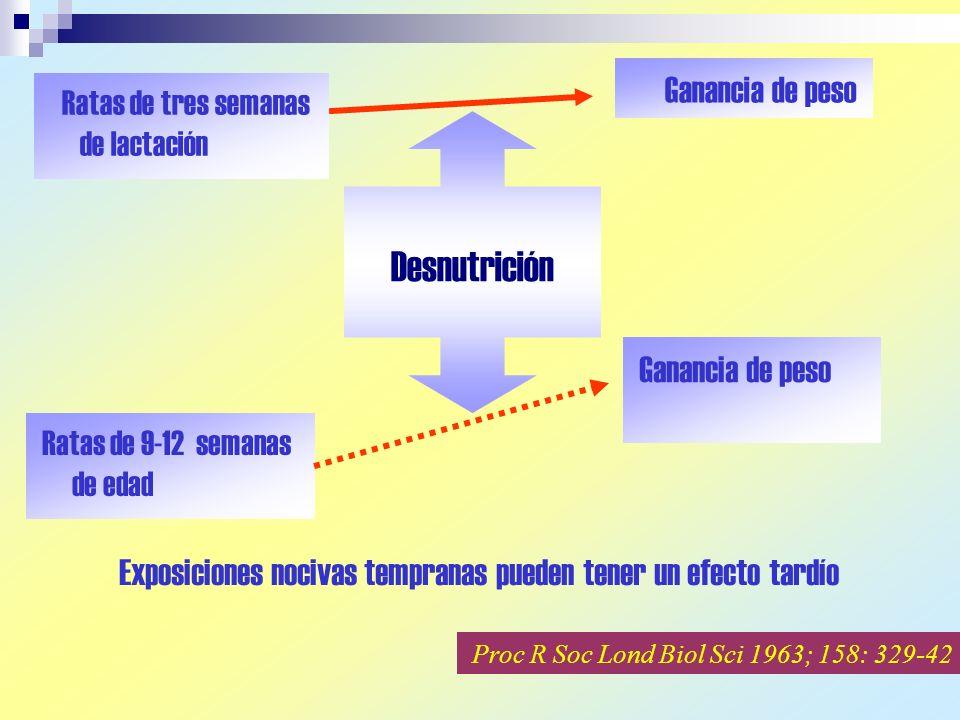 Ratas de tres semanas de lactación Ganancia de peso Ratas de 9-12 semanas de edad Ganancia de peso Proc R Soc Lond Biol Sci 1963; 158: 329-42 Desnutrición Exposiciones nocivas tempranas pueden tener un efecto tardío
