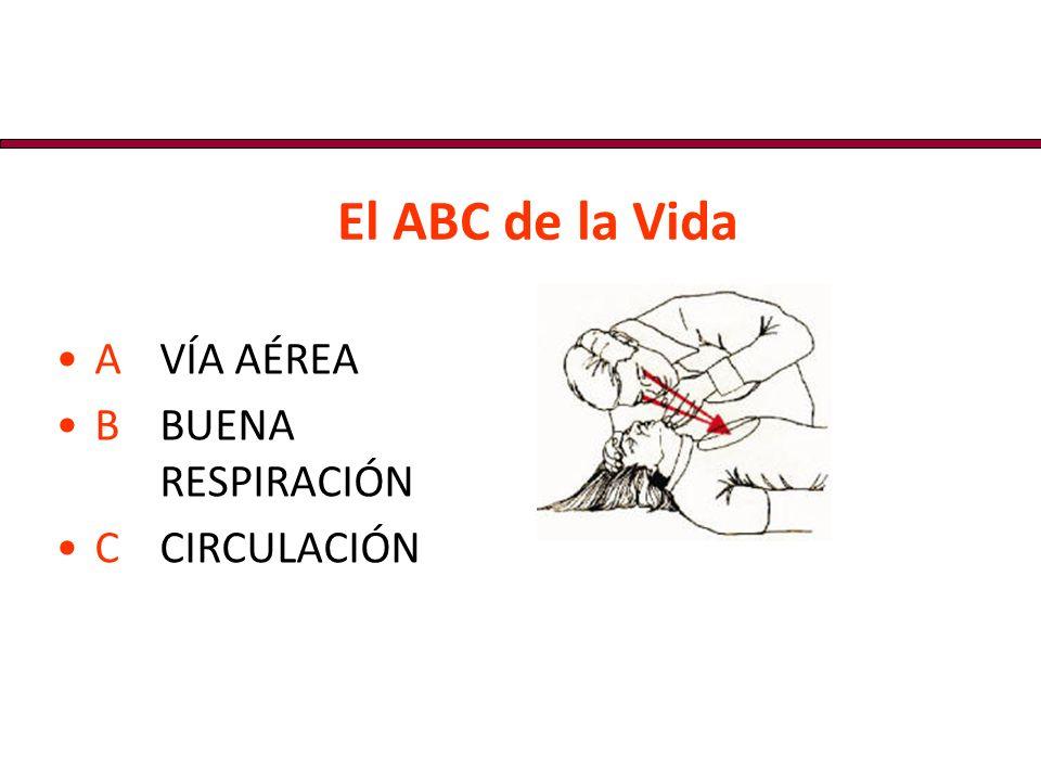 El ABC de la Vida AVÍA AÉREA BBUENA RESPIRACIÓN CCIRCULACIÓN