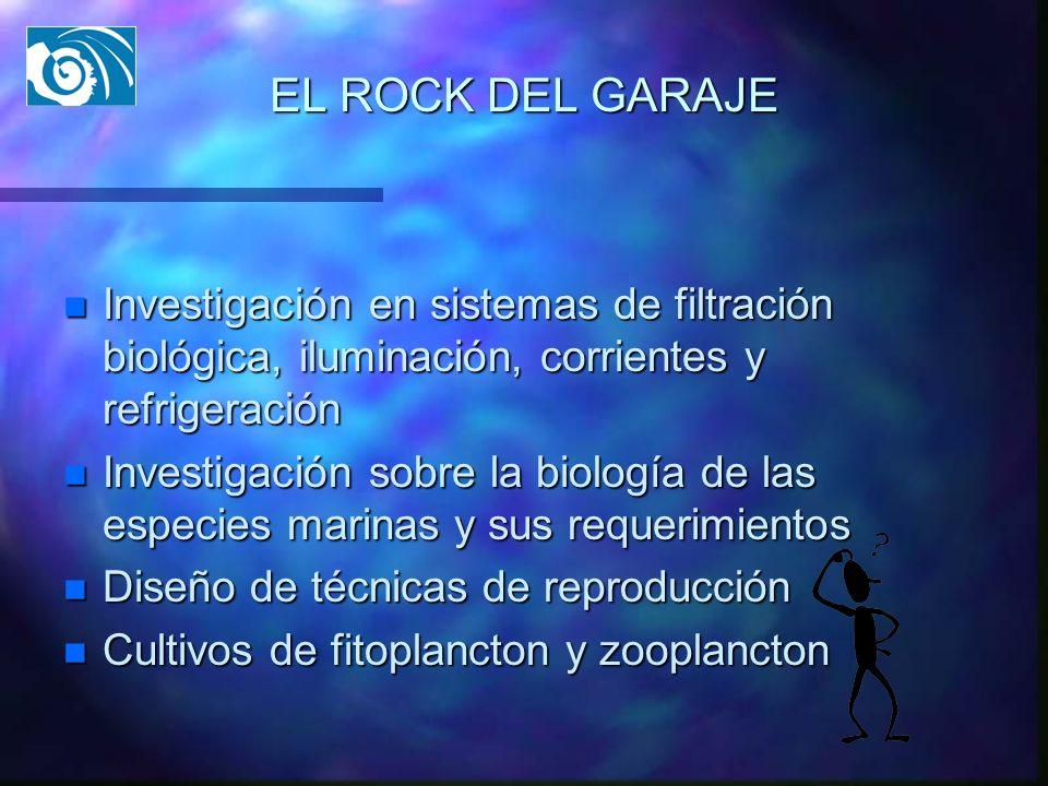EL ROCK DEL GARAJE n Investigación en sistemas de filtración biológica, iluminación, corrientes y refrigeración n Investigación sobre la biología de l