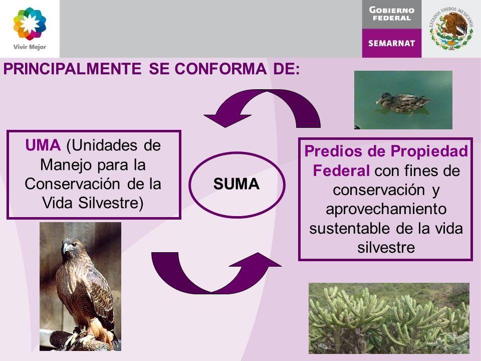 PRINCIPALMENTE SE CONFORMA DE: SUMA Predios de Propiedad Federal con fines de conservación y aprovechamiento sustentable de la vida silvestre UMA (Unidades de Manejo para la Conservación de la Vida Silvestre)