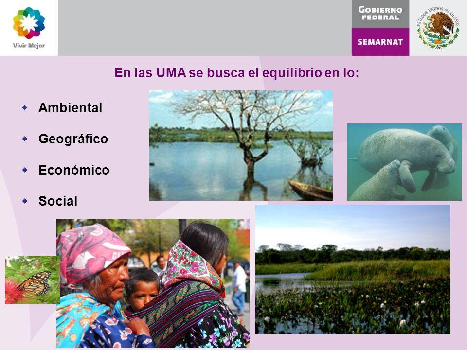 En las UMA se busca el equilibrio en lo: Ambiental Geográfico Económico Social