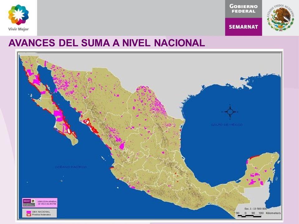 AVANCES DEL SUMA A NIVEL NACIONAL