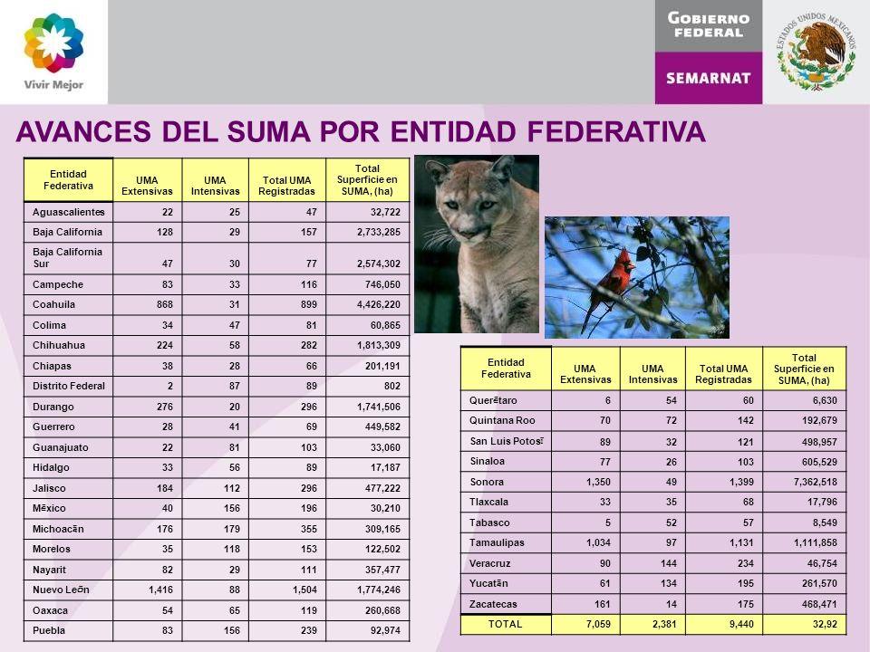 AVANCES DEL SUMA POR ENTIDAD FEDERATIVA Entidad Federativa UMA Extensivas UMA Intensivas Total UMA Registradas Total Superficie en SUMA, (ha) Aguascalientes 22254732,722 Baja California 128291572,733,285 Baja California Sur 4730772,574,302 Campeche 8333116746,050 Coahuila 868318994,426,220 Colima 34478160,865 Chihuahua 224582821,813,309 Chiapas 382866201,191 Distrito Federal 28789802 Durango 276202961,741,506 Guerrero 284169449,582 Guanajuato 228110333,060 Hidalgo 33568917,187 Jalisco 184112296477,222 M é xico 4015619630,210 Michoac á n 176179355309,165 Morelos 35118153122,502 Nayarit 8229111357,477 Nuevo Le ó n 1,416881,5041,774,246 Oaxaca 5465119260,668 Puebla 8315623992,974 Entidad Federativa UMA Extensivas UMA Intensivas Total UMA Registradas Total Superficie en SUMA, (ha) Quer é taro 654606,630 Quintana Roo 7072142192,679 San Luis Potos í 8932121498,957 Sinaloa 7726103605,529 Sonora 1,350491,3997,362,518 Tlaxcala 33356817,796 Tabasco 552578,549 Tamaulipas 1,034971,1311,111,858 Veracruz 9014423446,754 Yucat á n 61134195261,570 Zacatecas 16114175468,471 TOTAL7,0592,3819,44032,92