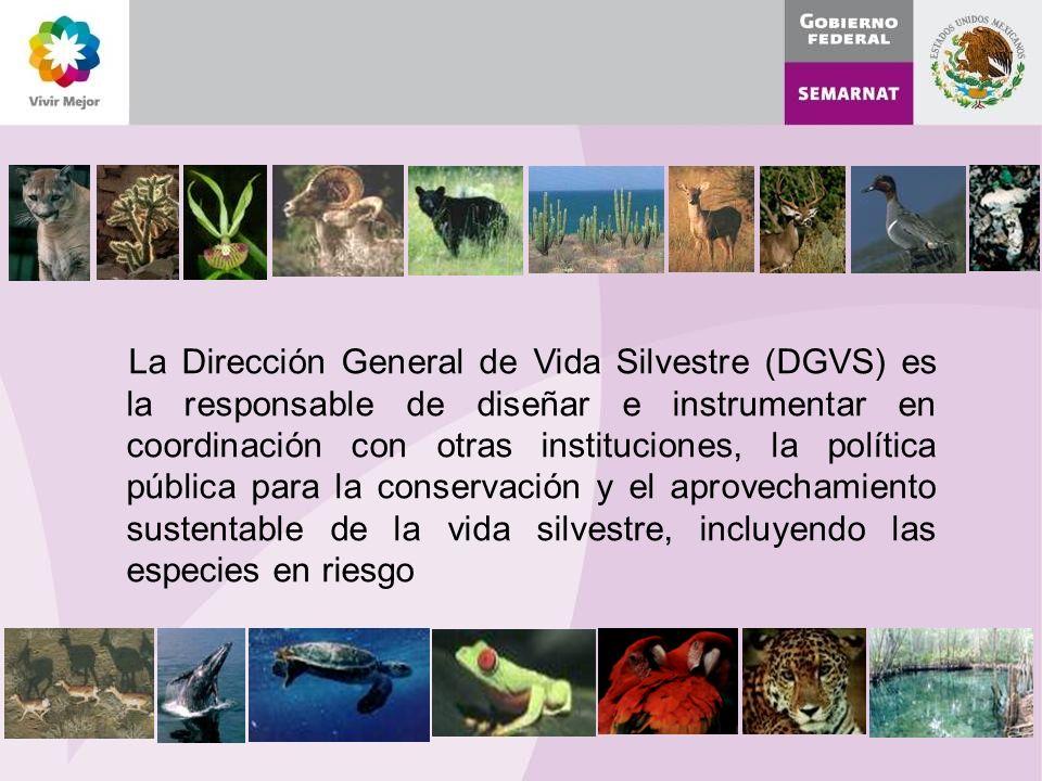 La Dirección General de Vida Silvestre (DGVS) es la responsable de diseñar e instrumentar en coordinación con otras instituciones, la política pública para la conservación y el aprovechamiento sustentable de la vida silvestre, incluyendo las especies en riesgo