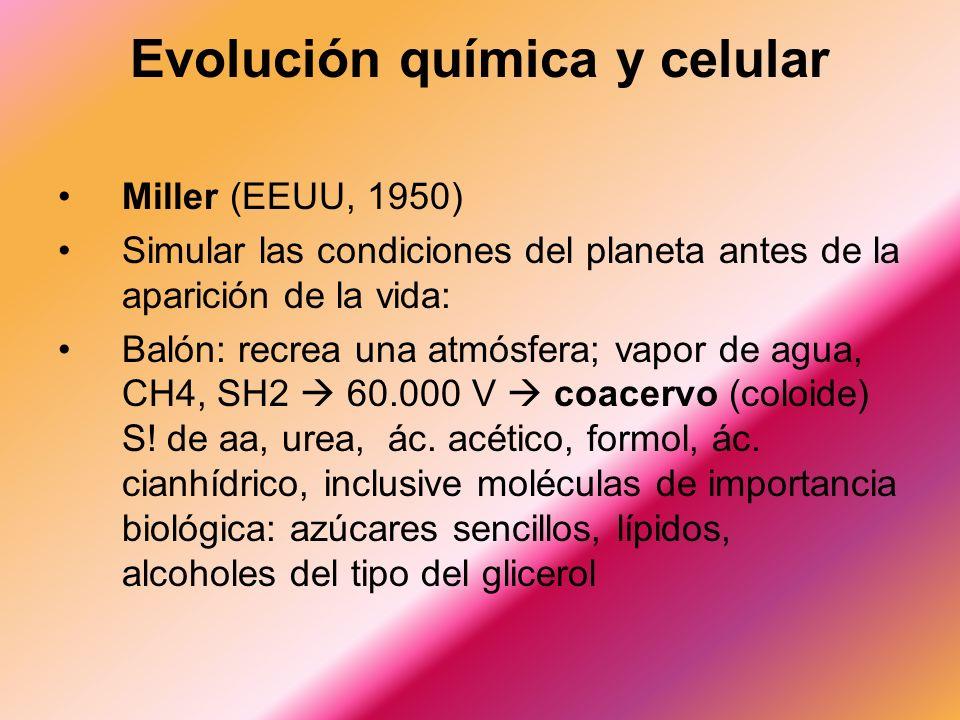 Miller (EEUU, 1950) Simular las condiciones del planeta antes de la aparición de la vida: Balón: recrea una atmósfera; vapor de agua, CH4, SH2 60.000 V coacervo (coloide) S.