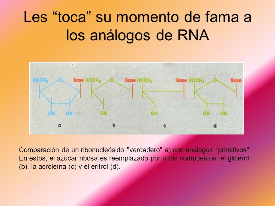 Les toca su momento de fama a los análogos de RNA Comparación de un ribonucleósido verdadero a) con análogos primitivos .