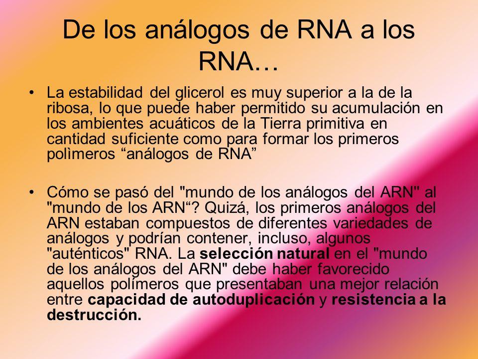 De los análogos de RNA a los RNA… La estabilidad del glicerol es muy superior a la de la ribosa, lo que puede haber permitido su acumulación en los ambientes acuáticos de la Tierra primitiva en cantidad suficiente como para formar los primeros polìmeros análogos de RNA Cómo se pasó del mundo de los análogos del ARN al mundo de los ARN.