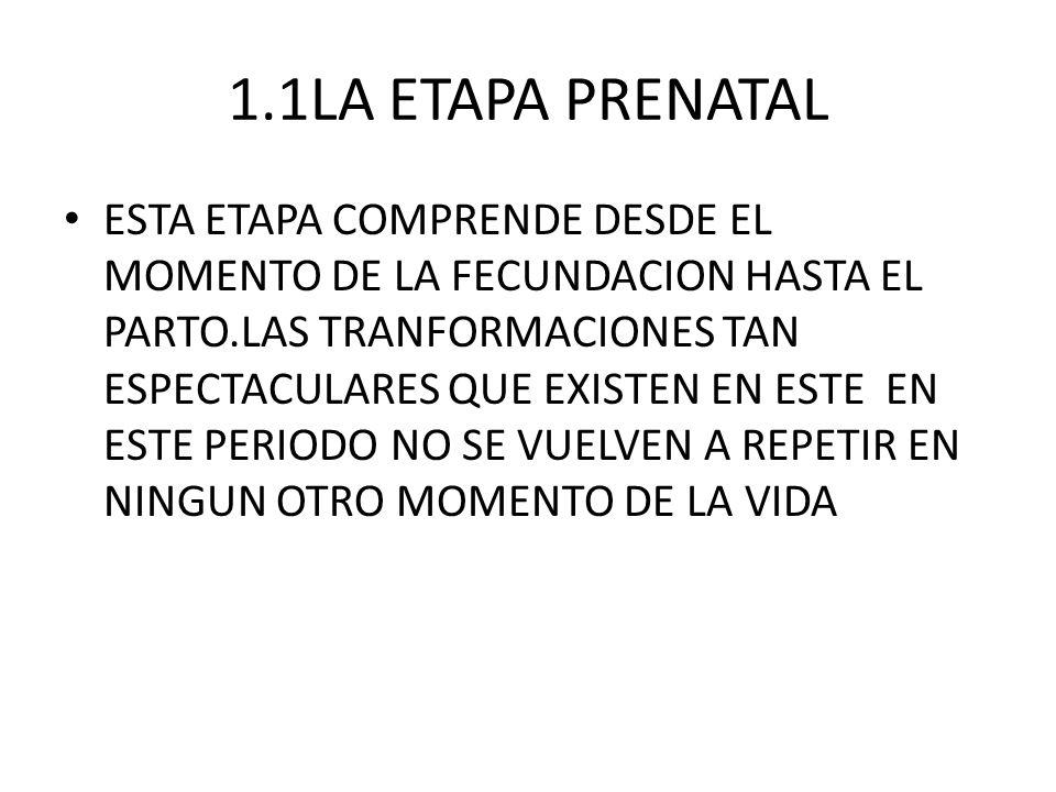 1.1LA ETAPA PRENATAL ESTA ETAPA COMPRENDE DESDE EL MOMENTO DE LA FECUNDACION HASTA EL PARTO.LAS TRANFORMACIONES TAN ESPECTACULARES QUE EXISTEN EN ESTE