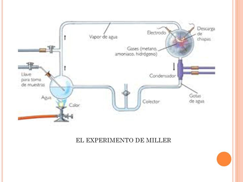 EL EXPERIMENTO DE MILLER
