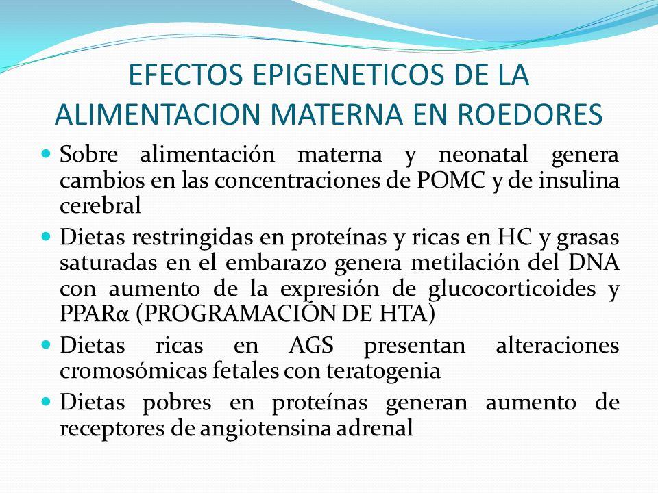 EFECTOS EPIGENETICOS DE LA ALIMENTACION MATERNA EN ROEDORES Sobre alimentación materna y neonatal genera cambios en las concentraciones de POMC y de i