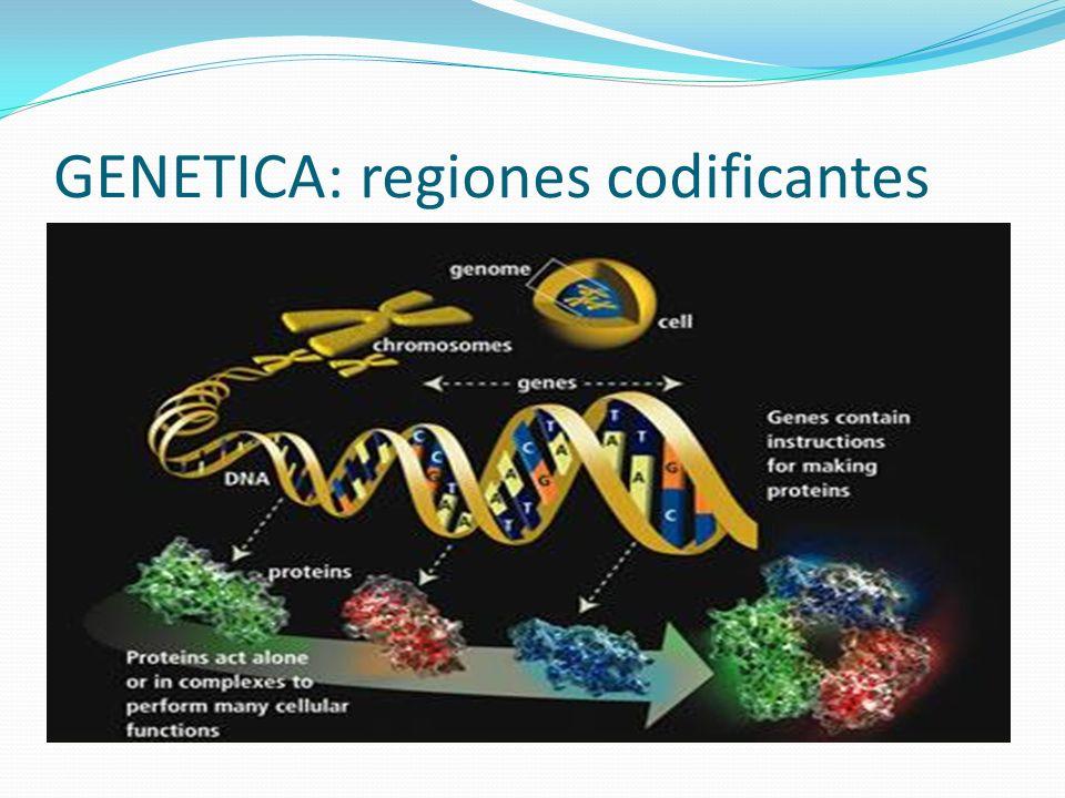 GENETICA: regiones codificantes