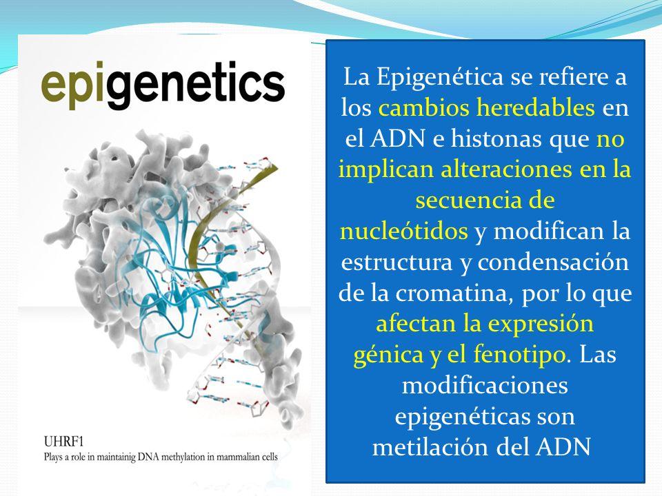 La Epigenética se refiere a los cambios heredables en el ADN e histonas que no implican alteraciones en la secuencia de nucleótidos y modifican la est