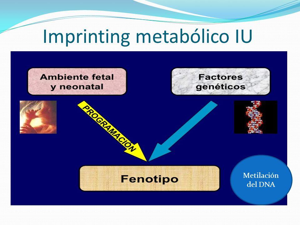 Imprinting metabólico IU Metilación del DNA