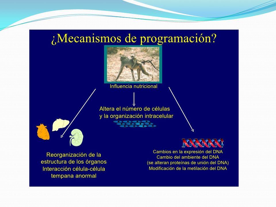 Efectos de la metilación del DNA Antecedentes: Hijos de madres con Diabetes gestacional tienen mayor riesgo de presentar abortos, prematuridad, macrosomía al nacimiento.