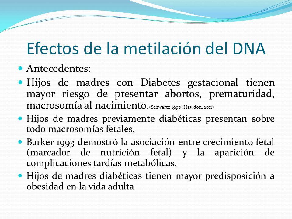 Efectos de la metilación del DNA Antecedentes: Hijos de madres con Diabetes gestacional tienen mayor riesgo de presentar abortos, prematuridad, macros