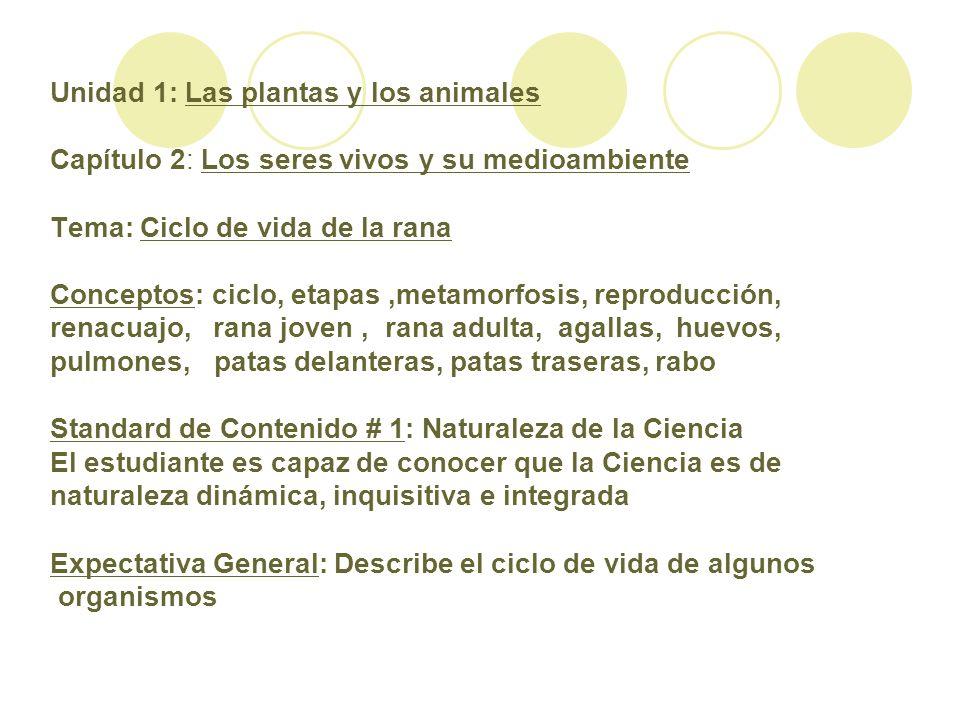 Unidad 1: Las plantas y los animales Capítulo 2: Los seres vivos y su medioambiente Tema: Ciclo de vida de la rana Conceptos: ciclo, etapas,metamorfos