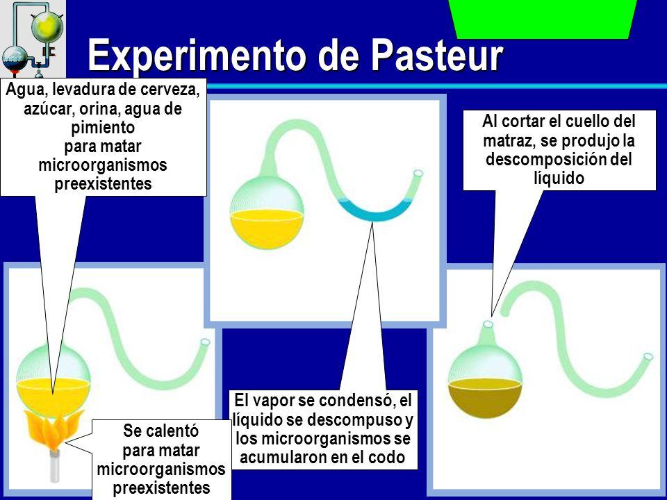Experimento de Pasteur Agua, levadura de cerveza, azúcar, orina, agua de pimiento para matar microorganismos preexistentes El vapor se condensó, el lí