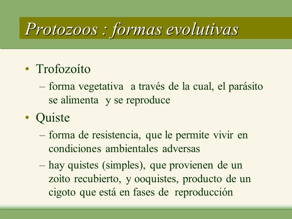 Protozoos : formas evolutivas Trofozoíto –forma vegetativa a través de la cual, el parásito se alimenta y se reproduce Quiste –forma de resistencia, que le permite vivir en condiciones ambientales adversas –hay quistes (simples), que provienen de un zoìto recubierto, y ooquistes, producto de un cigoto que está en fases de reproducción