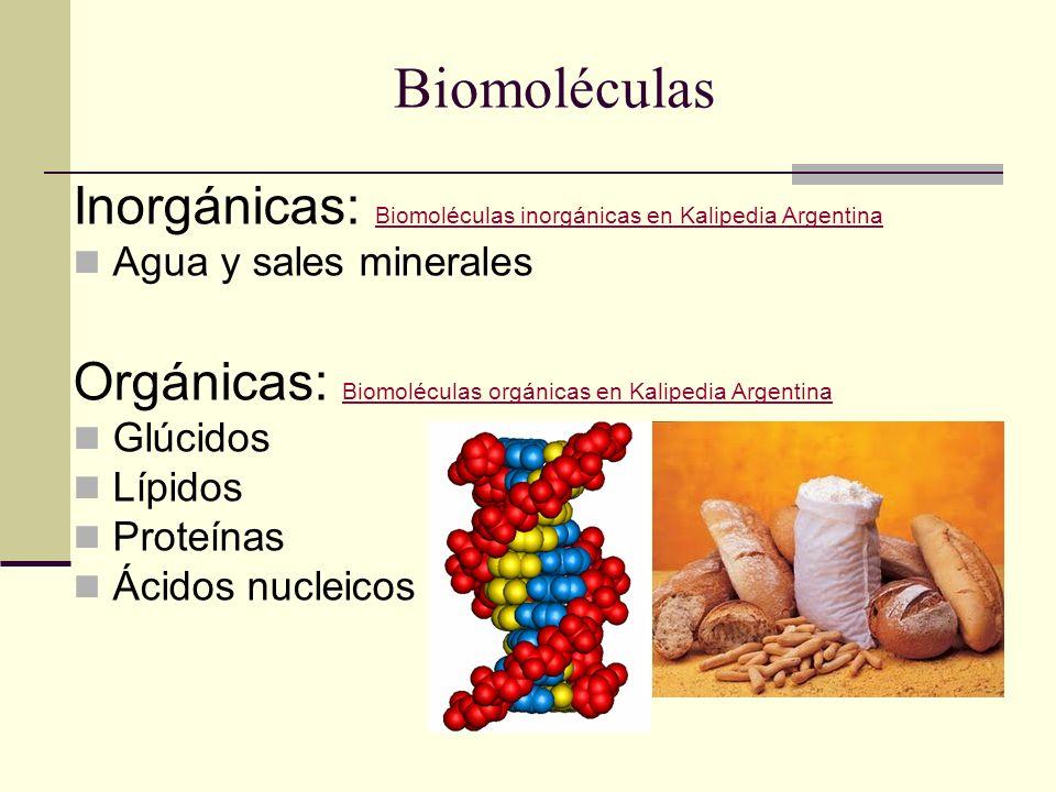 Biomoléculas Inorgánicas: Biomoléculas inorgánicas en Kalipedia Argentina Biomoléculas inorgánicas en Kalipedia Argentina Agua y sales minerales Orgán