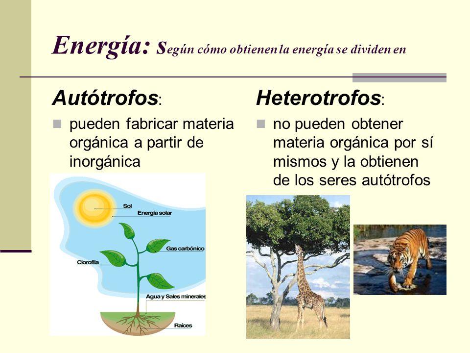 Energía: s egún cómo obtienen la energía se dividen en Autótrofos : pueden fabricar materia orgánica a partir de inorgánica Heterotrofos : no pueden o