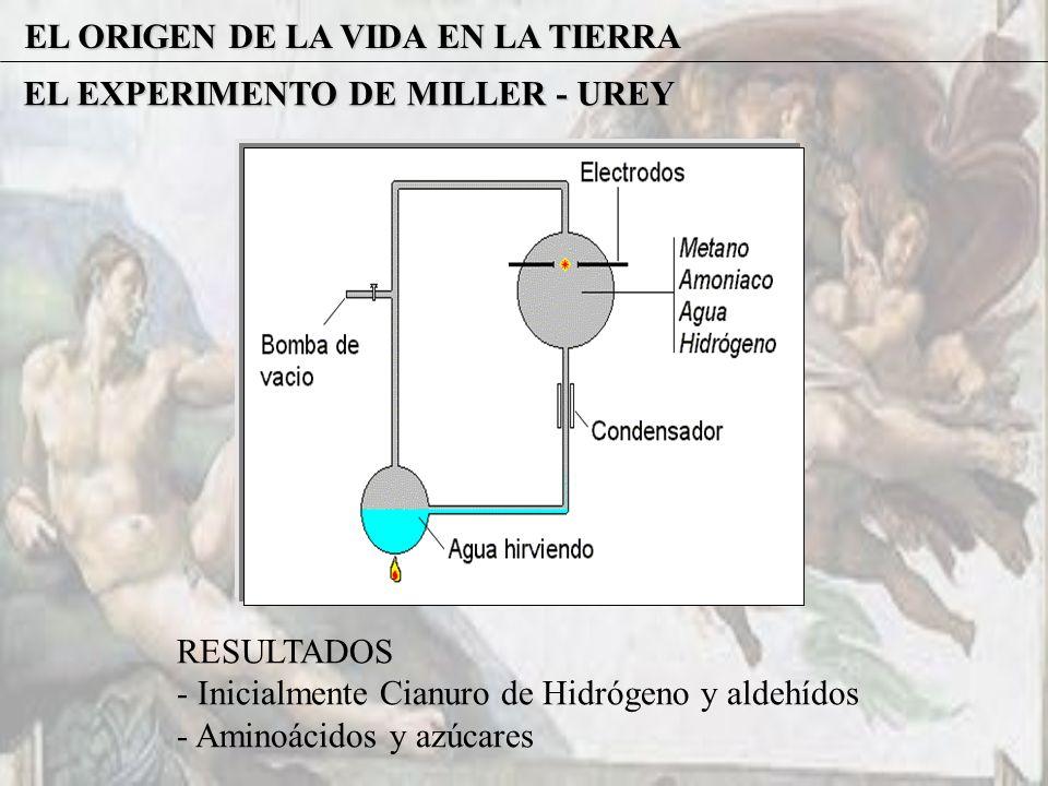 EL ORIGEN DE LA VIDA EN LA TIERRA EL EXPERIMENTO DE MILLER - UREY RESULTADOS - Inicialmente Cianuro de Hidrógeno y aldehídos - Aminoácidos y azúcares