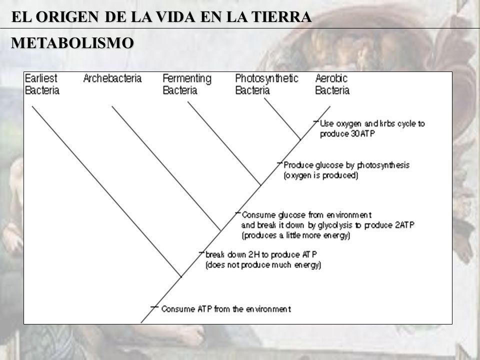 EL ORIGEN DE LA VIDA EN LA TIERRA METABOLISMO