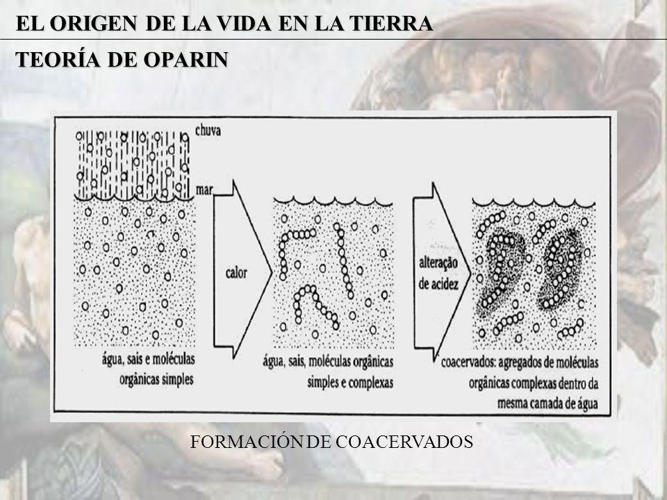 EL ORIGEN DE LA VIDA EN LA TIERRA TEORÍA DE OPARIN FORMACIÓN DE COACERVADOS