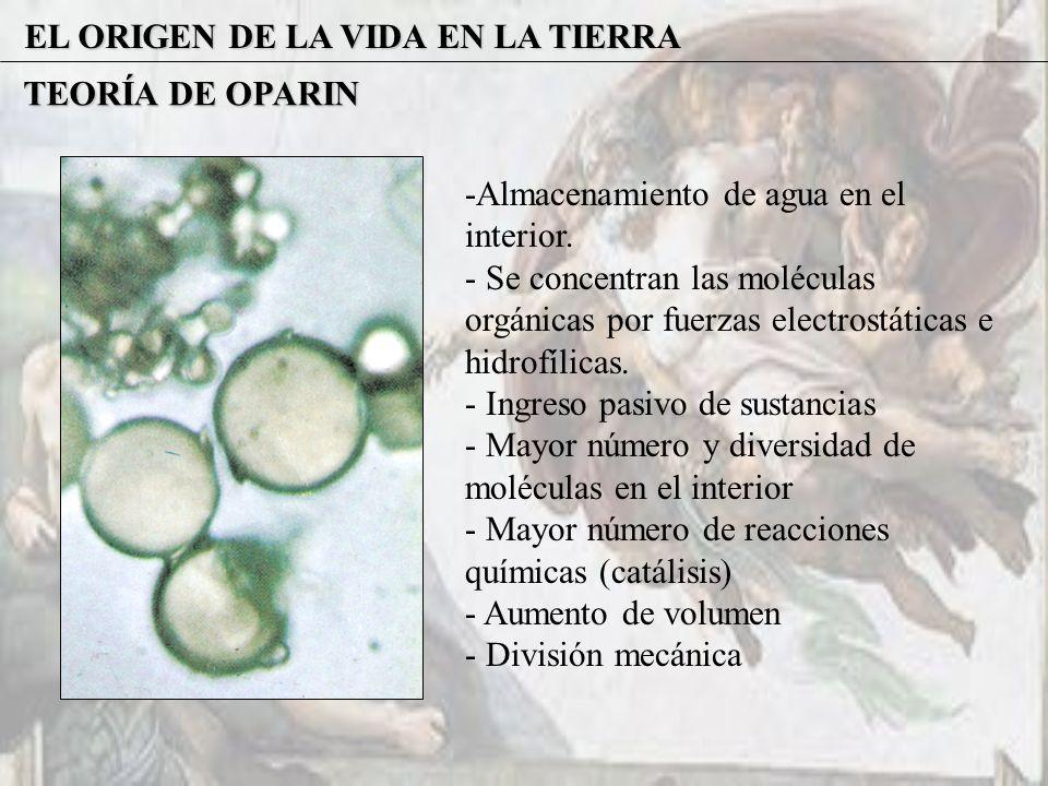 EL ORIGEN DE LA VIDA EN LA TIERRA TEORÍA DE OPARIN -Almacenamiento de agua en el interior. - Se concentran las moléculas orgánicas por fuerzas electro