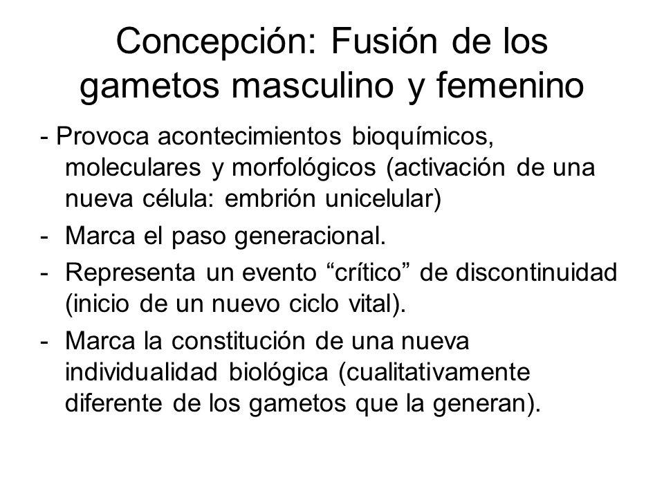 Concepción: Fusión de los gametos masculino y femenino - Provoca acontecimientos bioquímicos, moleculares y morfológicos (activación de una nueva célu
