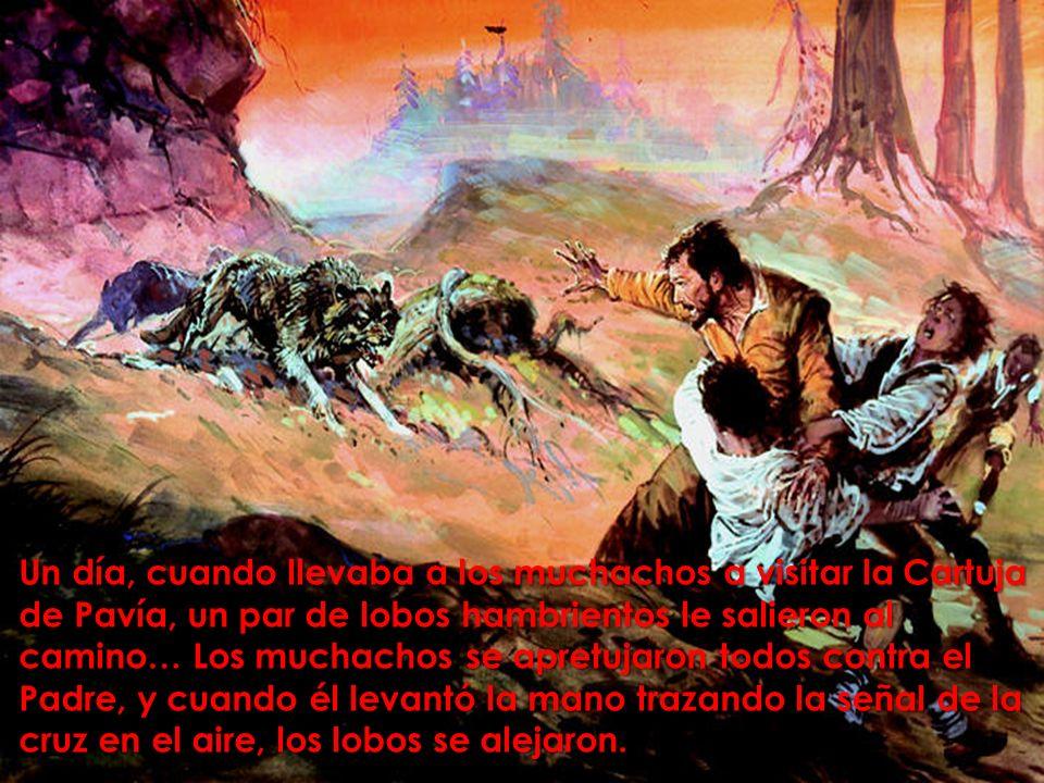 Un día, cuando llevaba a los muchachos a visitar la Cartuja de Pavía, un par de lobos hambrientos le salieron al camino… Los muchachos se apretujaron